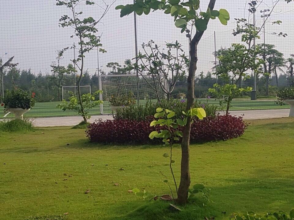 Sân Bóng Đá Trong Khu Biệt Thự FLC
