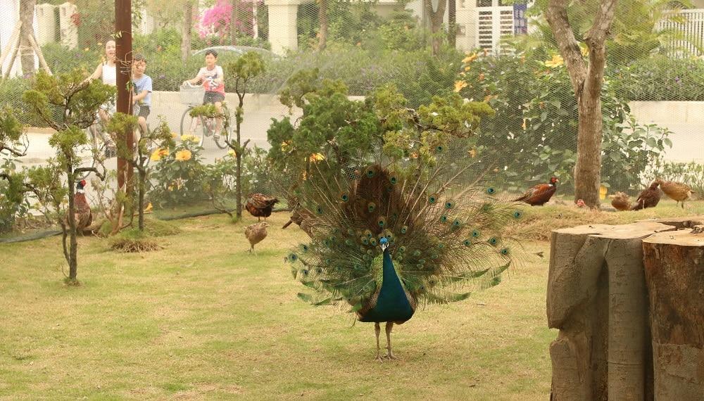 Vườn Thú Tại FLC Sầm Sơn